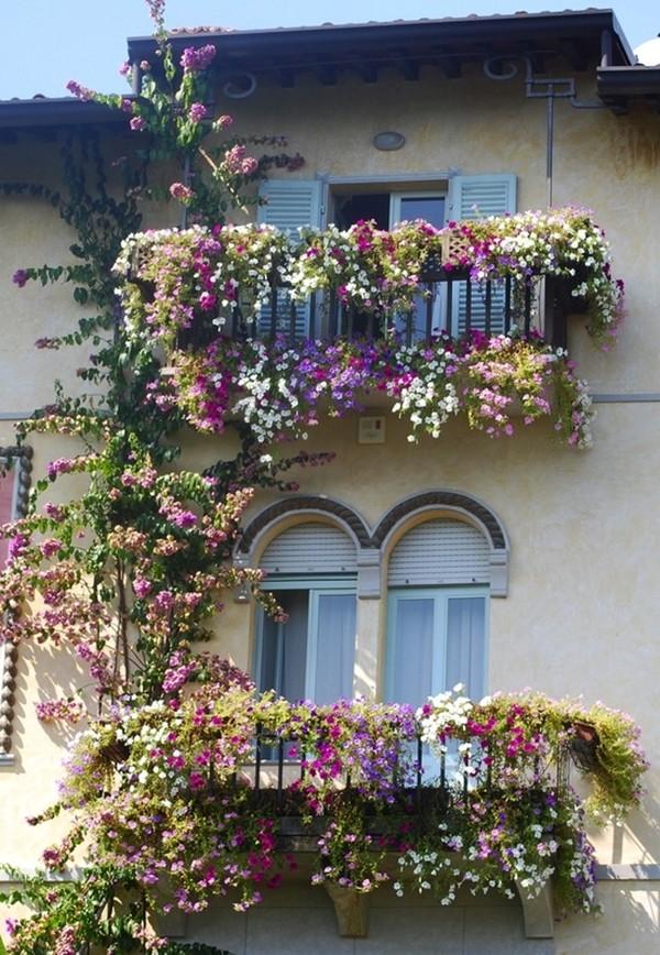 Những giống cây hoa thích hợp để làm giàn leo trước nhà 1