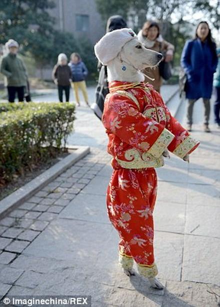 Xiaoniu thường diện những bộ trang phục sặc sỡ. Nguồn: Rex