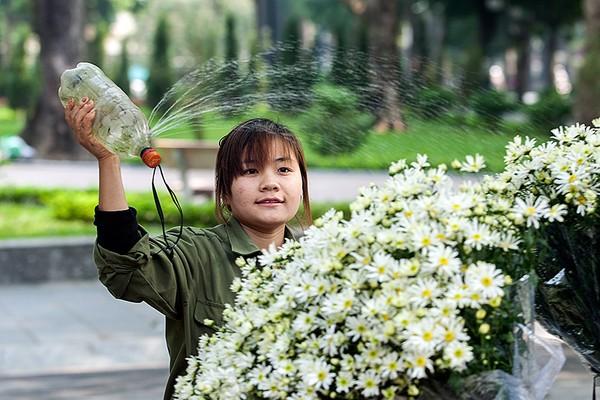 mùa đông, cúc họa mi, hàng hoa, hoa cúc