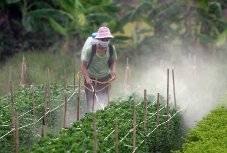 Lạm dụng hóa chất bảo vệ thực vật gây ảnh hưởng đến sức khỏe con người và môi trường sống. Ảnh minh họa.