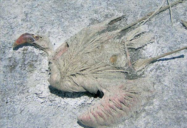 Những con chim, hay dơi khi lao xuống nước sẽ chết ngay lập tức và cơ thể của chúng co cứng lại theo tư thế ở những khoảnh khắc cuối cùng.