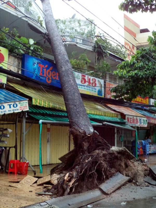 Cây cổ thụ đổ làm gãy ban công nhà dân trên đường An Dương Vương, quận 5