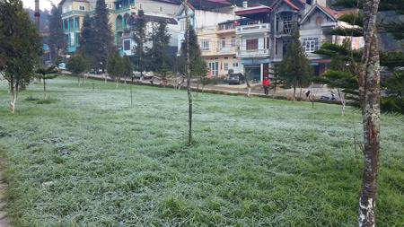 Sương muối bao phủ lên cây cỏ ở thị trấn Sa Pa.