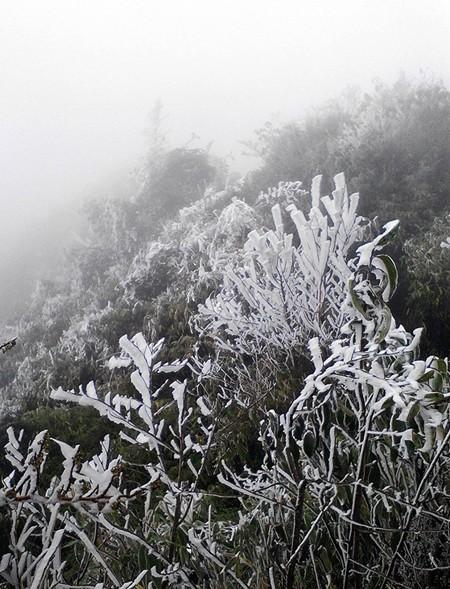 Băng tuyết phủ trắng cây trên đỉnh Fansipan