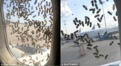 Ong bám đầy các cửa sổ