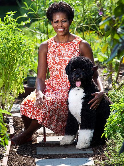 COMING UP ROSES photo | Bo Obama, Michelle Obama