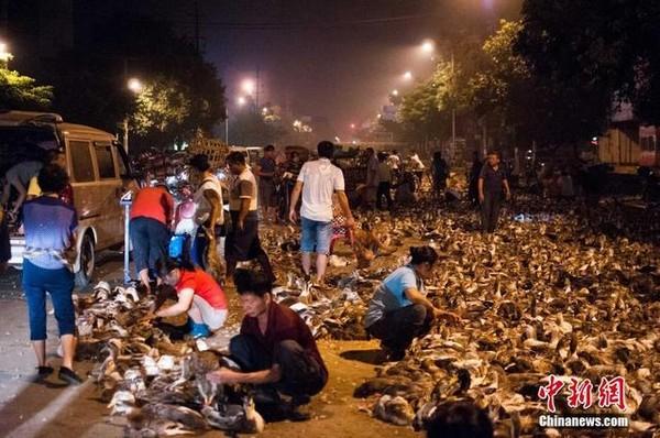 ducks-ghostfestival-1-283a3