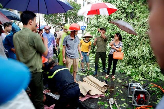 Một người đàn ông khi đi xe máy qua ngã tư Quang Trung - Nguyễn Du thì bất ngờ cây xà cừ lớn bật gốc, đè trúng khiến nạn nhân tử vong tại chỗ. Ảnh: Tiền phong