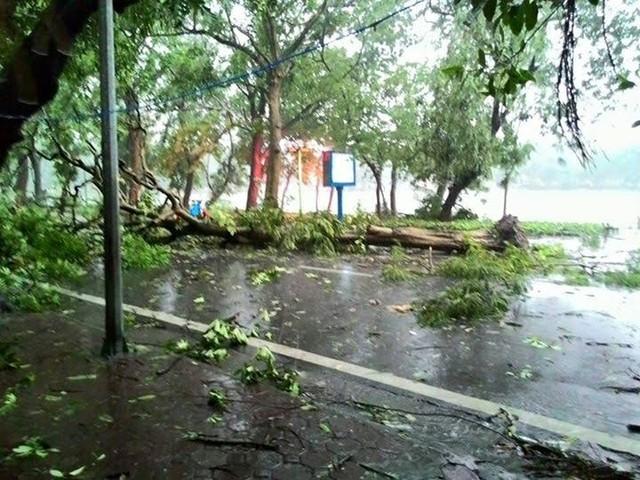 Theo như người dân kể lại, chỉ trong vòng 2 phút đã có 3 cây bật gốc trên đường Nguyễn Du.