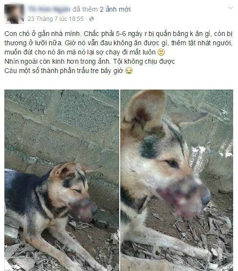 Thêm chú chó bị buộc chặt mõm được cứu sống