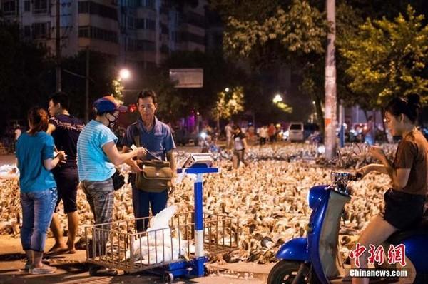 ducks-ghostfestival-2-283a3