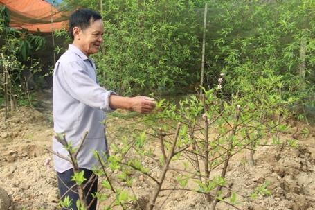 Nhờ dịch vụ trông giữ cây cảnh, đào thuê mà ông Quang thu về hàng chục triệu đồng mỗi năm
