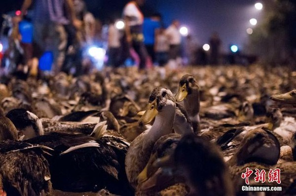 ducks-ghostfestival-3-283a3