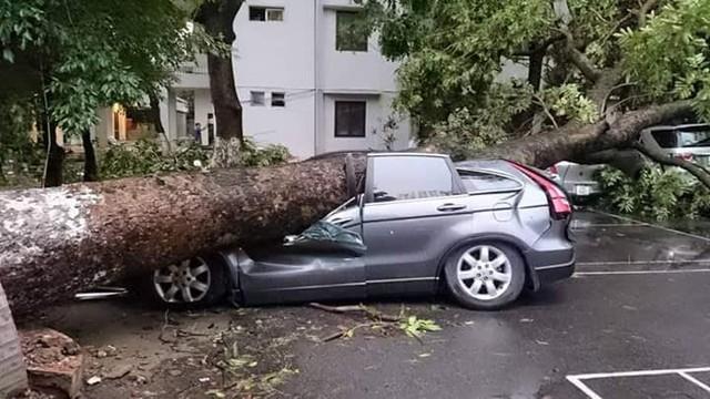 Ô tô bị đè trúng trong trận giông lốc hôm 13/6. (Ảnh: Otofun)