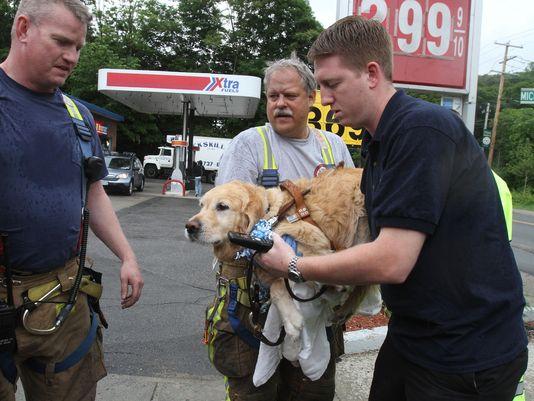 Figo bị thương sau khi xả thân cứu chủ. Ảnh: The Journal News