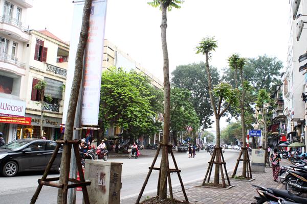 Hàng cây mới được thay thế trên phố Huế.