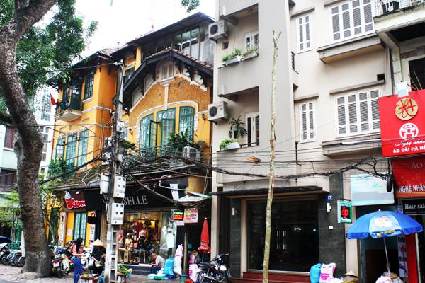 Một cây mới đứng lẻ loi trên phố Ngô Thì Nhậm.