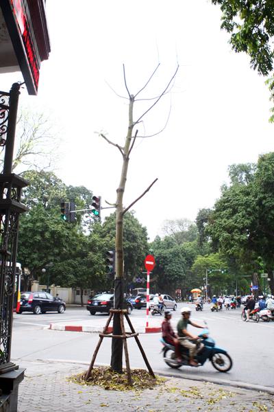 Một góc phố Trần Phú.