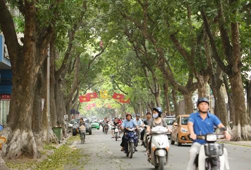 Đề án chặt hạ 6.700 cây đã dừng, rất nhiều cây xanh đã được cứu. Hà Nội vẫn còn đó những con đường nên thơ rợp bóng cây