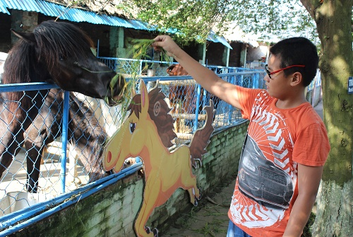 Cho ngựa ăn