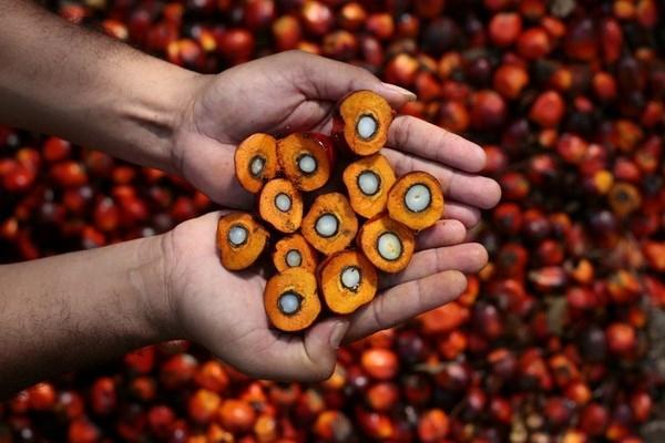 Việt Nam chưa phát hiện sản phẩm dầu cọ Ghanaian. Ảnh: T.L