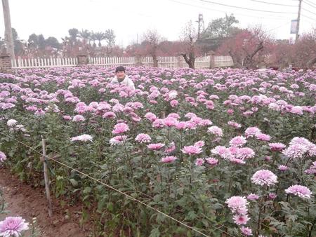 Đứng giữa vườn hoa nở, số tiền bỏ ra cũng chỉ là vài chục nghìn.