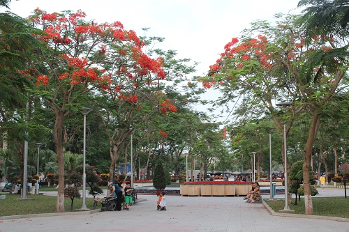 Dài trung tâm vườn hoa thành phố tràn đầy sắc đỏ