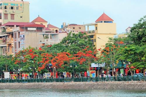 Sắc đỏ rực trên phố Nguyễn Đức Cảnh càng tô thắm thêm nét đẹp thành phố Cảng