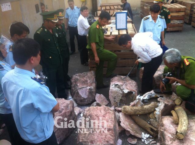 Các lực lượng chức năng bắt giữ ngà voi và sừng tê giác nhập lậu tại cảng Tiên Sa, Đà Nẵng. Ảnh T.Phong