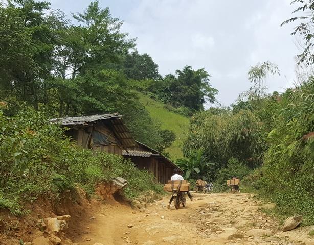 Ban ngày, lâm tặc chở gỗ từ rừng về trung tâm xã Bản Mù. Ảnh: Cao Tuân