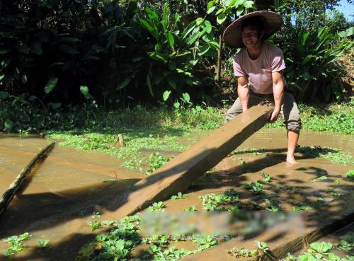 Anh Màng Văn Đoàn giúp bố vợ đảo gỗ ngâm chuẩn bị dựng nhà. Ảnh: Công Hải