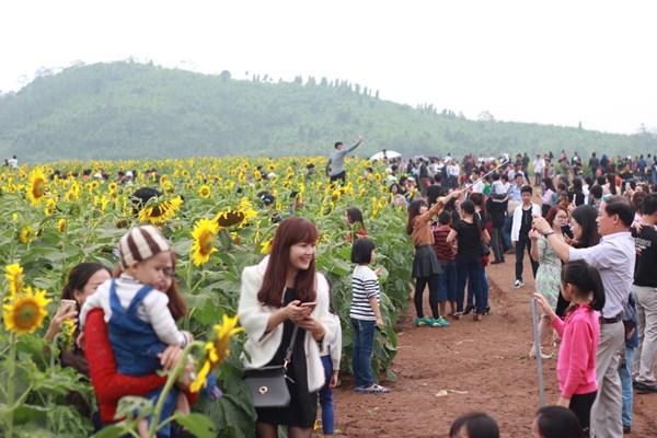 Đây là lần đầu tiên Nghệ An tổ chức ngày hội hoa hướng dương với mong muốn thu hút khách du lịch và nhà đầu tư thông qua sự kiện này.