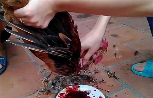 Tôi choáng khi thấy cảnh bạn gái con một mình cắt tiết gà. (Ảnh minh họa)
