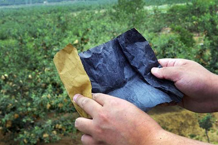 Loại túi tẩm thuốc sâu này được các trang trại trái cây địa phương dùng rộng rãi.
