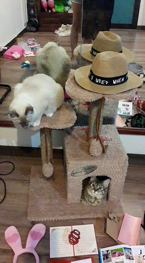 Hari Won rất thích nuôi mèo và chịu khó khoe thú cưng trên trang cá nhân.