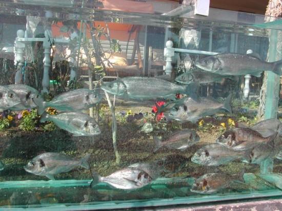 Khoảng 1.000 loài sinh vật đang sống trong bể cá này.
