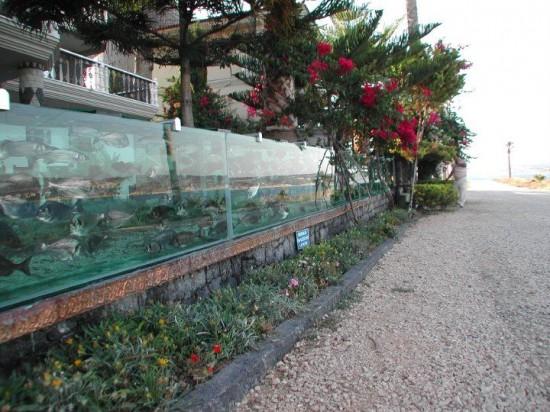 Cách đây 8 năm, Ali Gökçeoğlu đã mạnh dạn thay thế hàng rào kim loại ở mặt trước nhà bằng một bể cá dài 50 mét với hàng trăm loài cá và bạch tuộc.
