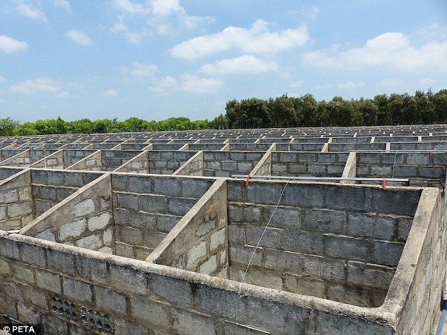 Hàng trăm chiếc chuồng chật chội được xây bằng bê tông để làm chỗ nuôi nhốt cá sấu trong trang trại.