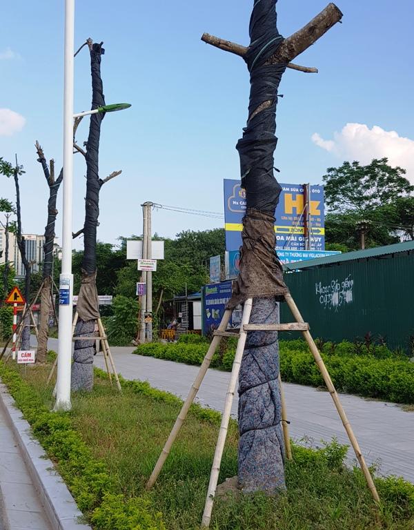 3 cây xanh này cũng đồng cảnh ngộ, bị chết khô héo.