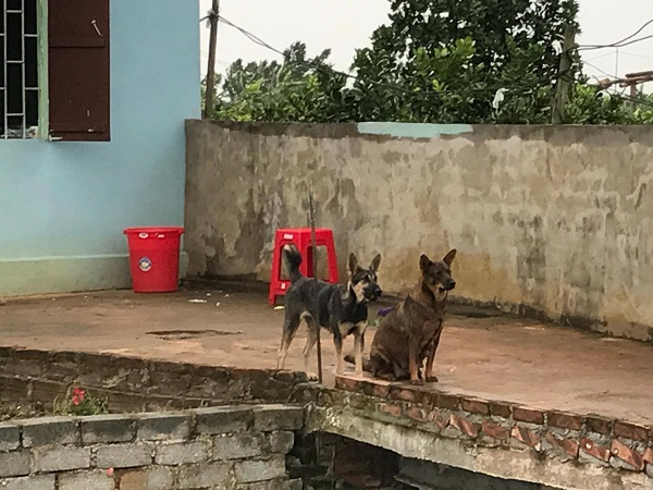 Con chó màu đen bị 2 đối tượng bắt trộm được giao trả cho chủ nhà. Ảnh: Nhật Tân