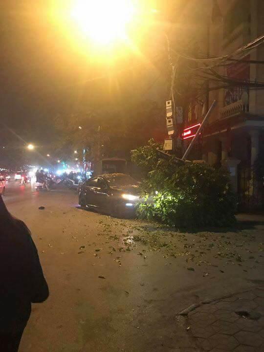 Chiếc xe điên chỉ dừng lại khi húc đổ cây sấu gần UBND phường Lạch Tray.