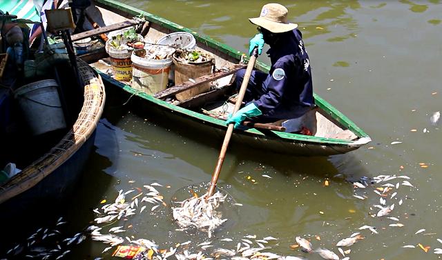 Ông Trần Trung Nam, Phó trưởng phòng Tài nguyên và Môi trường quận Thanh Khê cho biết, trong sáng nay, phòng đã đến hiện trường lấy mẫu để tiến phân tích để xác định nguyên cá chết.