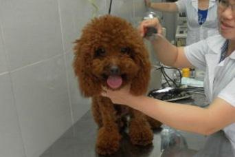 Chủ nhân của chú chó này sẵn sàng bỏ ra bạc triệu để tân trang nhan sắc cho chú.
