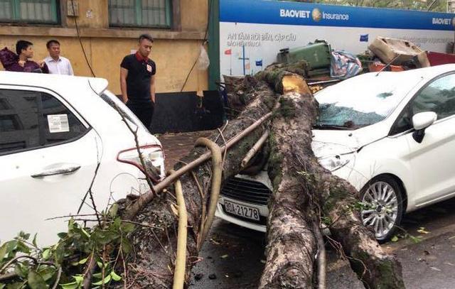 Cây đổ đè ô tô tại quận Hoàn Kiếm sáng ngày 31/3 do mưa lớn, gió to. Ảnh: VNN
