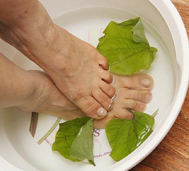 Dùng lá trầu không đun sôi với nước để nguội, cho thêm phèn chua rửa kỹ các kẽ ngón chân bị loét ngứa. Ảnh: T.G