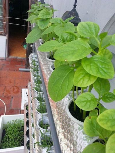 Ngoài thời gian làm việc, Minh Hương cũng dành thời gian để chăm sóc cho khu vườn nhỏ trên sân thượng của mình.