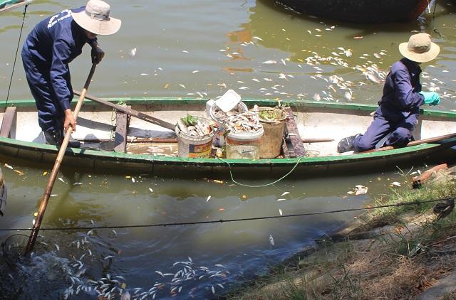 Trước đây cũng đã nhiều lần xảy ra tình trạng cá chết hàng loạt trên kênh Phú Lộc, tuy nhiên, đây là lần cá chết với số lượng lớn nhất.