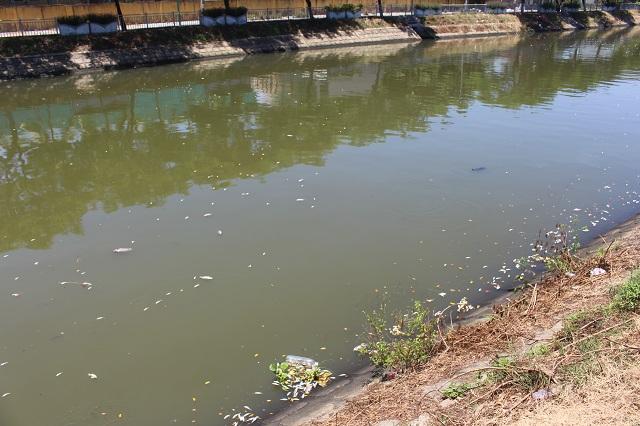Nước trên kênh Phú Lộc đục ngầu, mùi hôi tanh rất khó chịu.