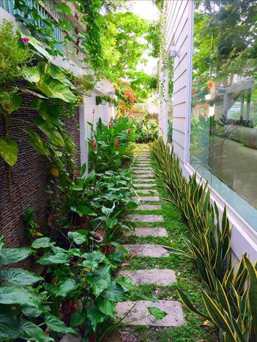 Dọc lối đi bên hông nhà, chủ nhân trồng những cây trang trí nhỏ.