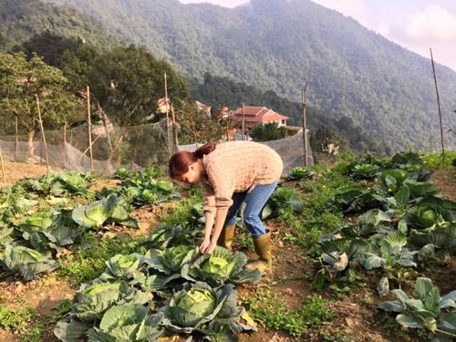 Những luống bắp cải to, xanh mướt của bà nội khiến Linh khá thích thú